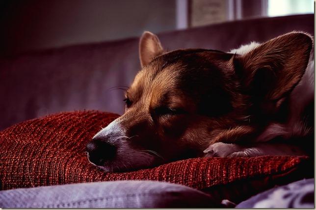 dog-2506271_1920