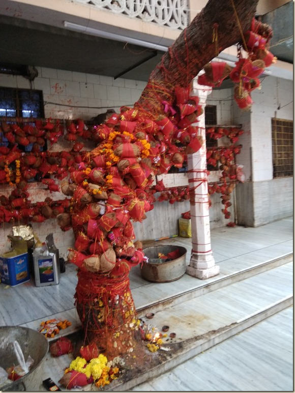 Trees of Faith Salasar Balaji Rajasthan