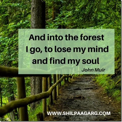 And into the forest I go, to lose my mind and find my soul - John Muir