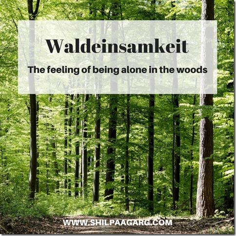 Waldeinsamkeit