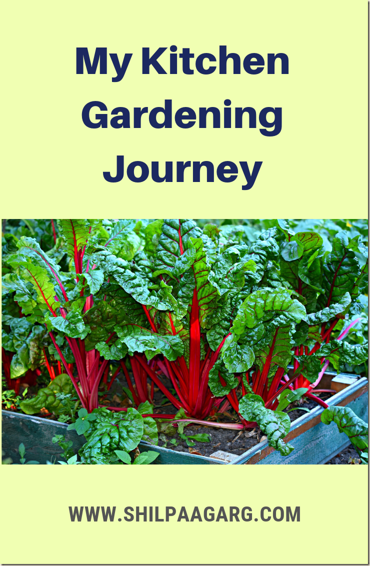 My Kitchen Gardening Journey