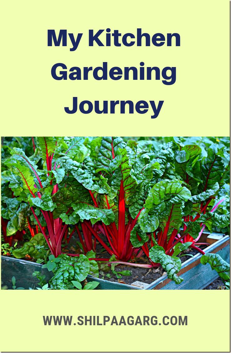 My Kitchen Gardening Journey